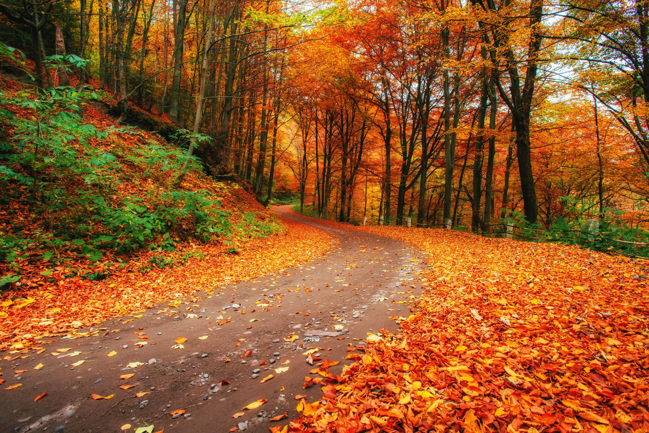 autumn alley